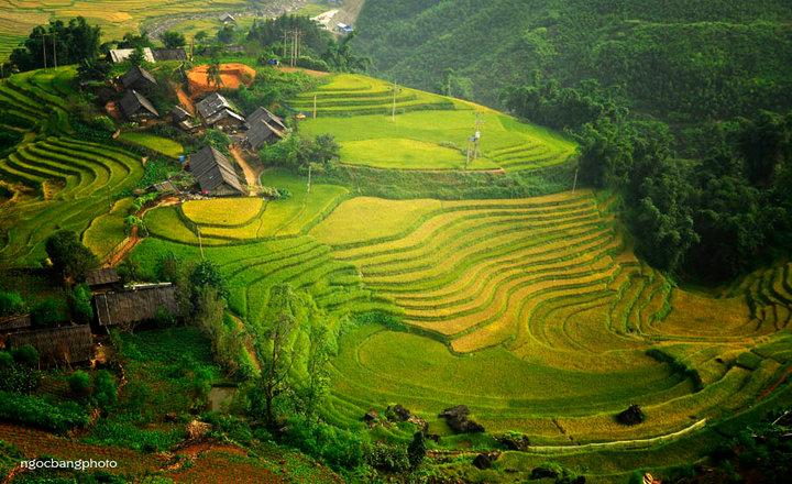 Day 1: Saturday: Sapa - Lao Chai -Ta Van (B/L)